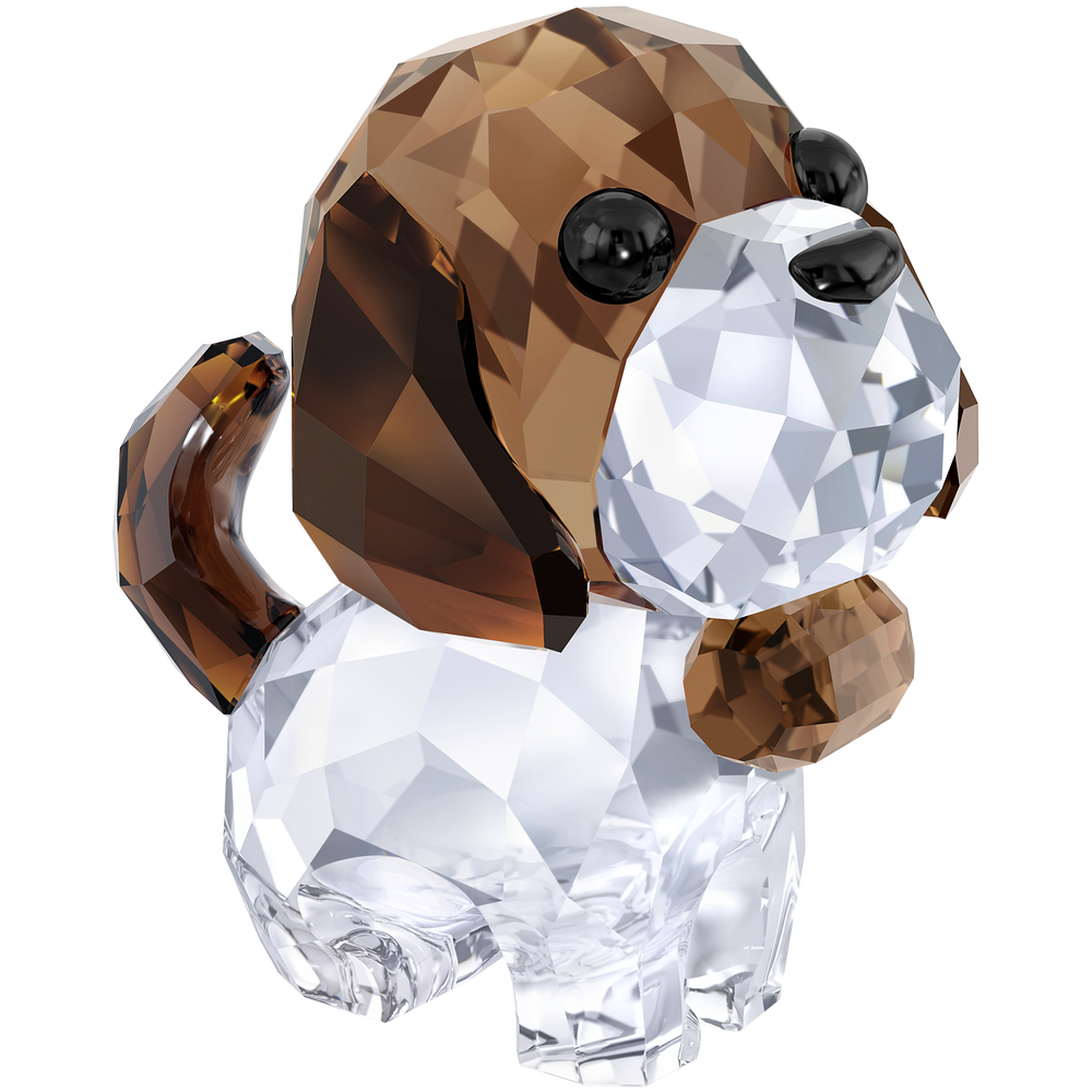 Puppy - Bernie the Saint Bernard
