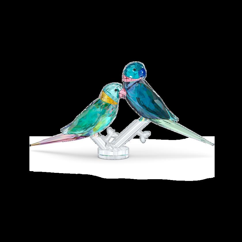 Jungle Beats Parakeet Couple Fife & Fifer